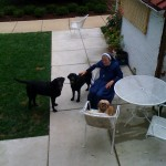 Georgetown Visitation's Sr Philomenia & pups Gabe and Nicholas