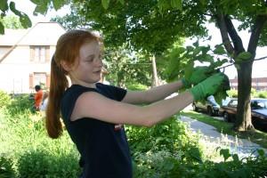 Pruning as spiritual process?