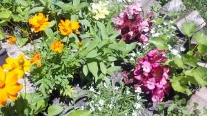 """""""bloom in the garden..."""""""