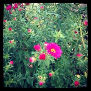 September blossoms