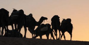 dromedaries-carawane-sunset_source-nosade